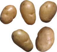 Potato PNG Free Download 14