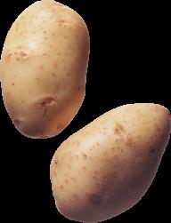 Potato PNG Free Download 28