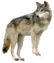 pride wolf free png download