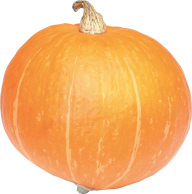 Pumpkin PNG Free Download 11