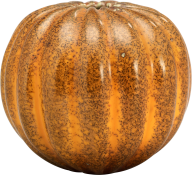 Pumpkin PNG Free Download 13