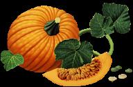 Pumpkin PNG Free Download 25
