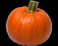 Pumpkin PNG Free Download 26