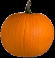 Pumpkin PNG Free Download 27