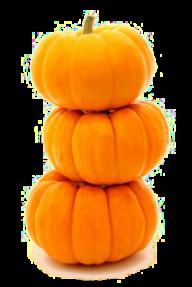 Pumpkin PNG Free Download 30