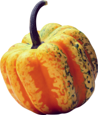 Pumpkin PNG Free Download 9