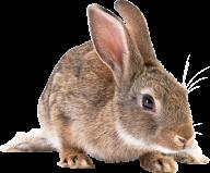Rabbit PNG Free Download 1