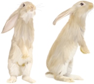 Rabbit PNG Free Download 11