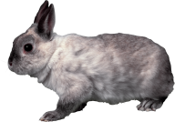 Rabbit PNG Free Download 13