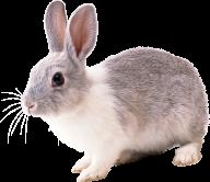 Rabbit PNG Free Download 16