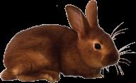 Rabbit PNG Free Download 18