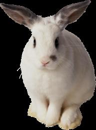 Rabbit PNG Free Download 19