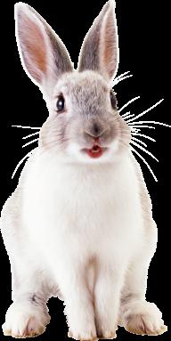 Rabbit PNG Free Download 20