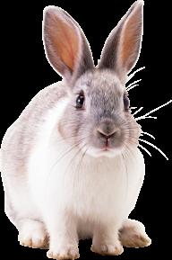 Rabbit PNG Free Download 21