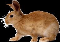 Rabbit PNG Free Download 24