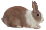 Rabbit PNG Free Download 25