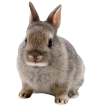 Rabbit PNG Free Download 26