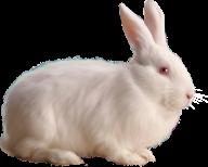Rabbit PNG Free Download 27