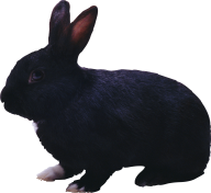 Rabbit PNG Free Download 28
