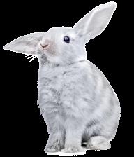 Rabbit PNG Free Download 29