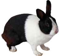 Rabbit PNG Free Download 3