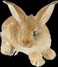 Rabbit PNG Free Download 30