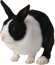 Rabbit PNG Free Download 4