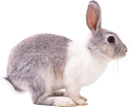 Rabbit PNG Free Download 6
