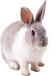 Rabbit PNG Free Download 7