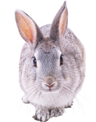 Rabbit PNG Free Download 8
