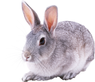 Rabbit PNG Free Download 9