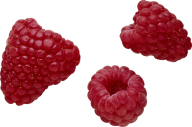 Raspberry PNG Free Download 1