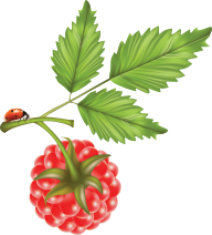 Raspberry PNG Free Download 11