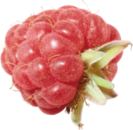 Raspberry PNG Free Download 17