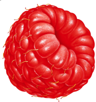 Raspberry PNG Free Download 19