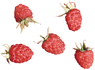 Raspberry PNG Free Download 21