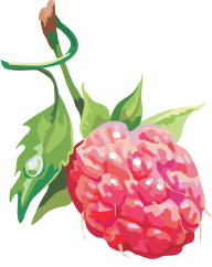 Raspberry PNG Free Download 22