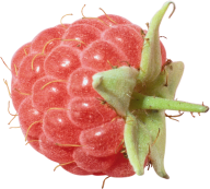 Raspberry PNG Free Download 23