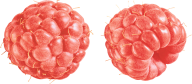 Raspberry PNG Free Download 28