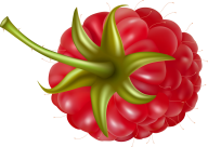 Raspberry PNG Free Download 29