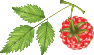 Raspberry PNG Free Download 30