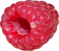 Raspberry PNG Free Download 31