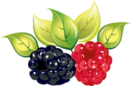 Raspberry PNG Free Download 33