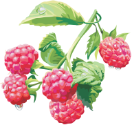 Raspberry PNG Free Download 4