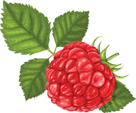 Raspberry PNG Free Download 5