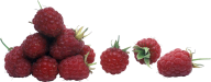 Raspberry PNG Free Download 6