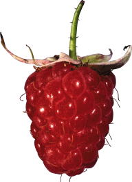 Raspberry PNG Free Download 7