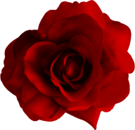 red flowered rose free png download (3)