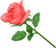 red rose green leaves clipart free png download