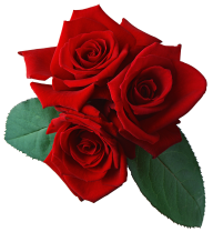 red rose with leaves free png download (3)